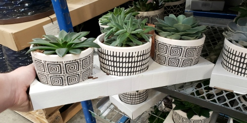 Succulents Are Easy Plants to Care For & Super Cute (+ We're Sharing a Costco Deal!)