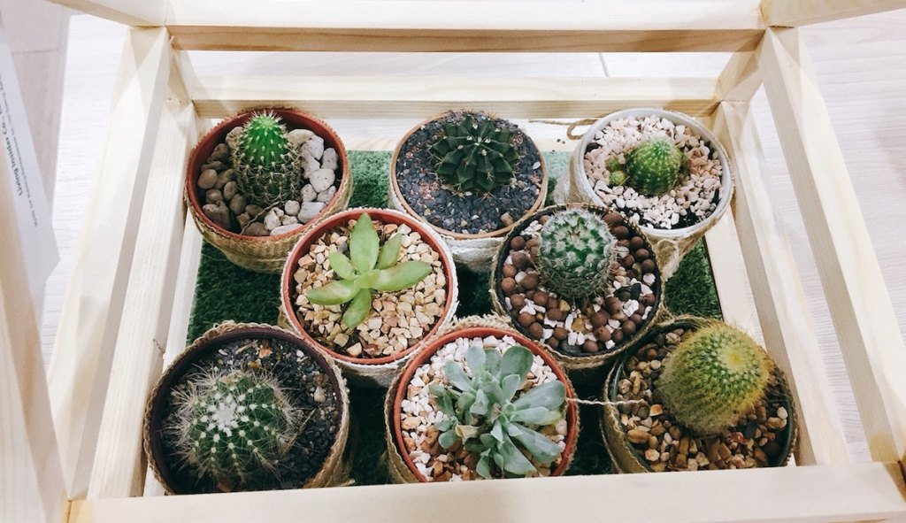 various plants in potted planters succulents in a small wood greenhouse