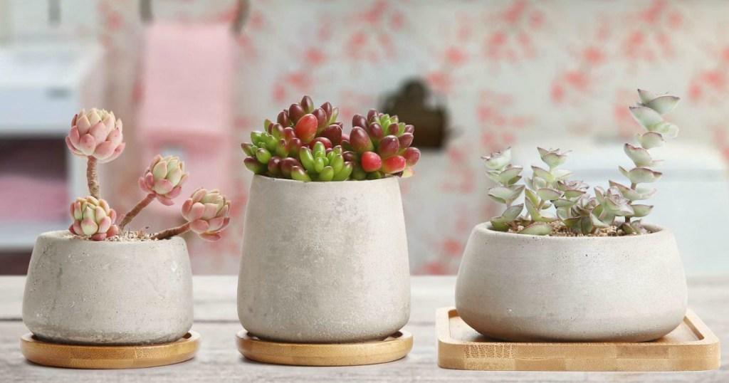 Concrete Cactus Pot Set