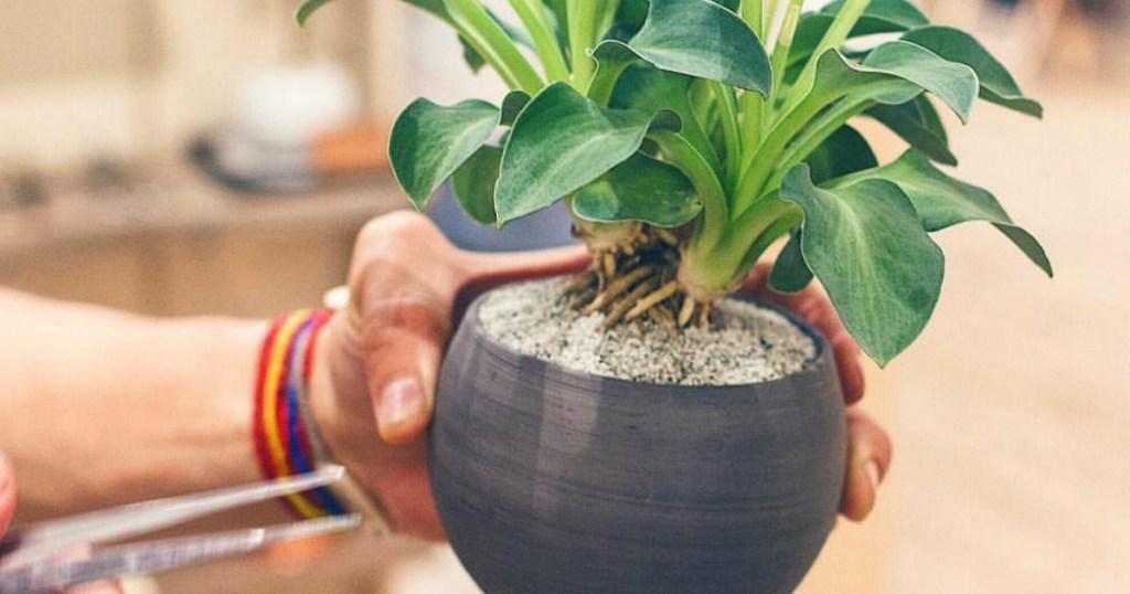 Holding Unique Potted Plant