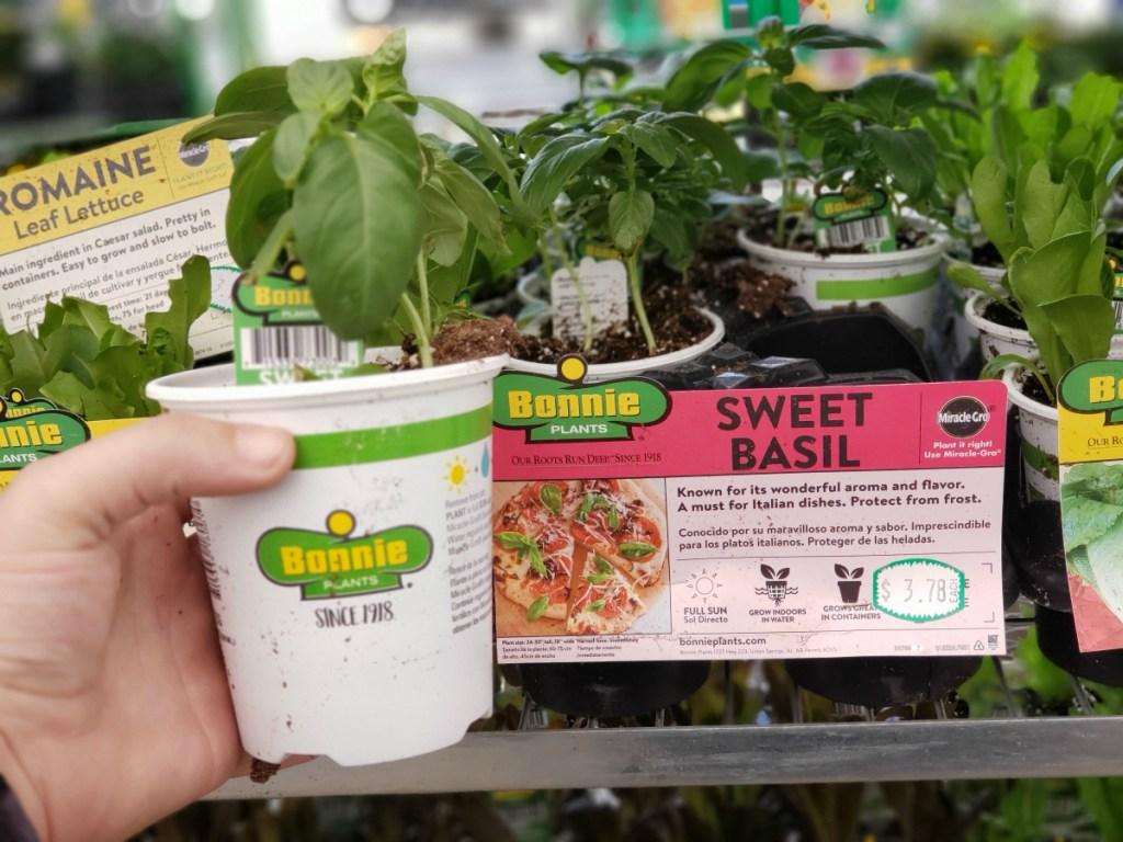 Bonnie plants at Lowe's