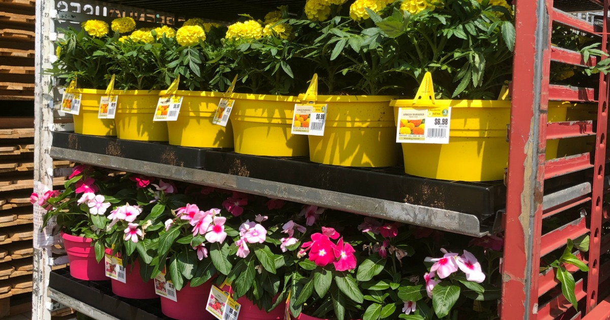 Flowers at Lowe's