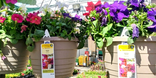Doing Some Gardening? Lowe's Hanging Flower Baskets Are Just $5 Each (Regularly $12.98)