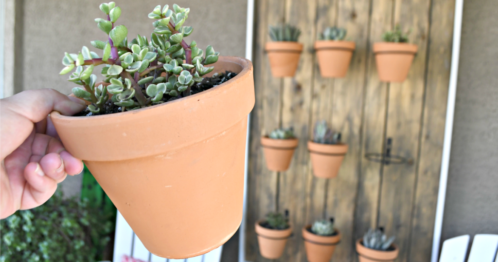 holding a potted succulent from a wall of hanging pots
