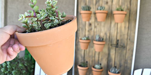 Build This Gorgeous DIY Hanging Succulent Wall for Your Patio