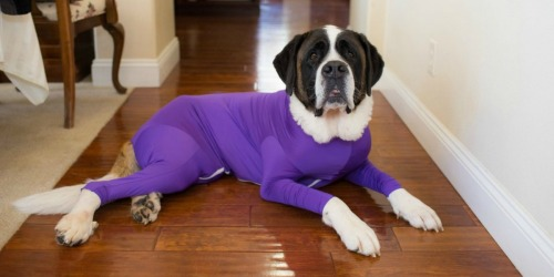This Dog Onesie Lets You Take Your Dog Anywhere Without Leaving a Trail of Hair
