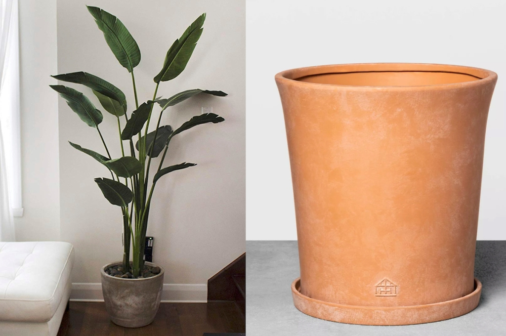banana lead houseplant with cement pot and terracotta planter