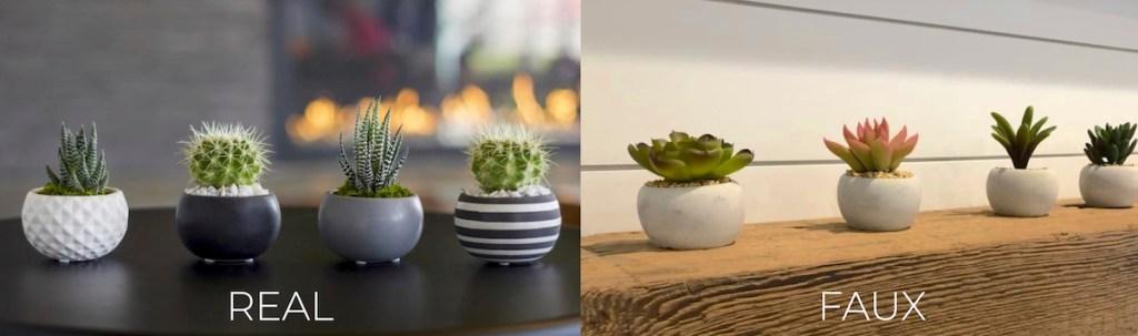 mini succulents in round planters