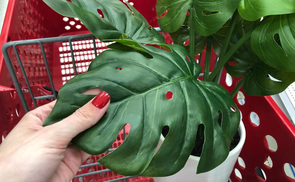 hand holding a green monstera leaf plant