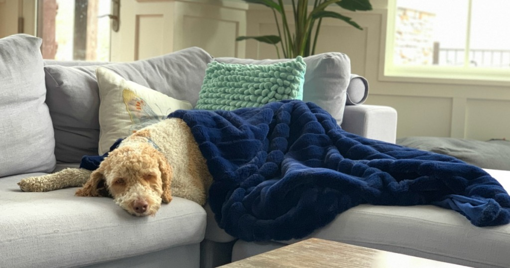 dog cuddling with blue blanket on couch