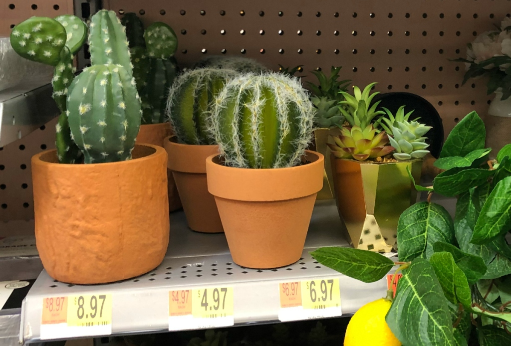 cactus plants at Walmart