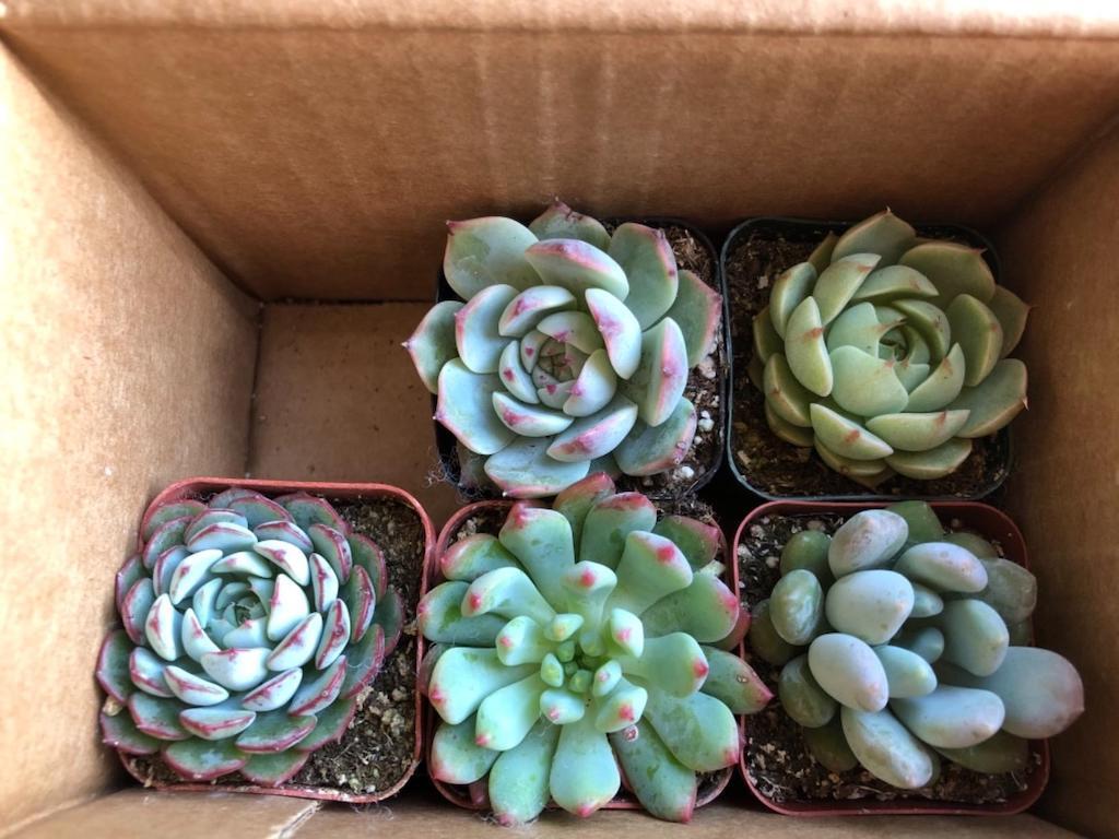 succulents in box