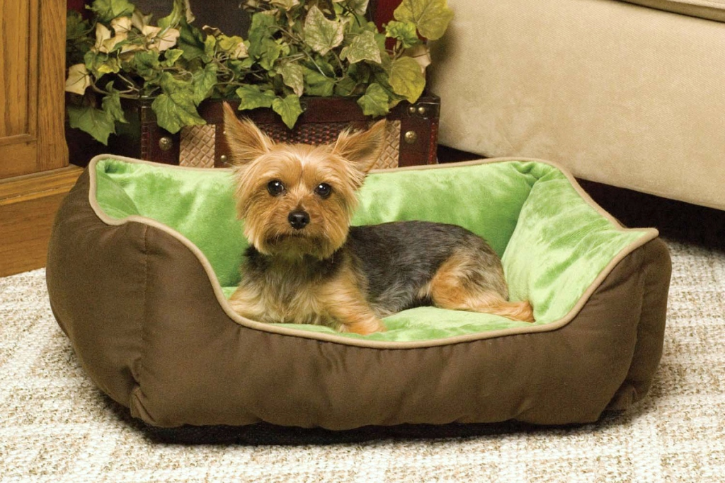 small dog laying in dog bed