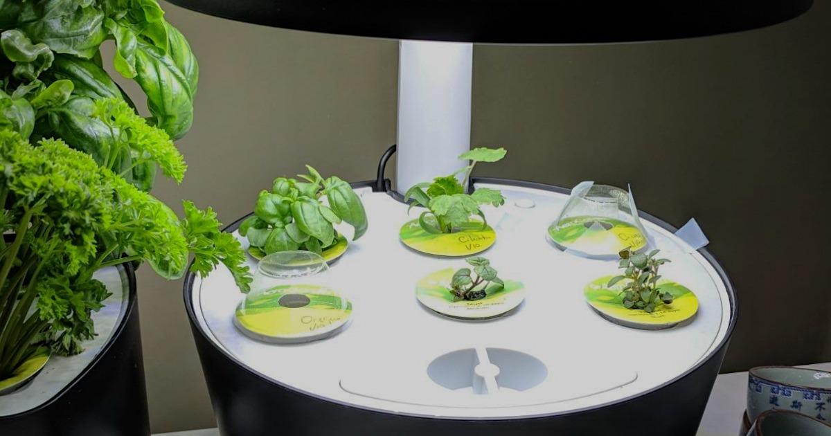 Aerogarden plants sprouting