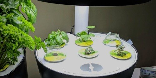 Get $75 Off This Best-Selling AeroGarden | Grow Fresh Herbs in Your Kitchen