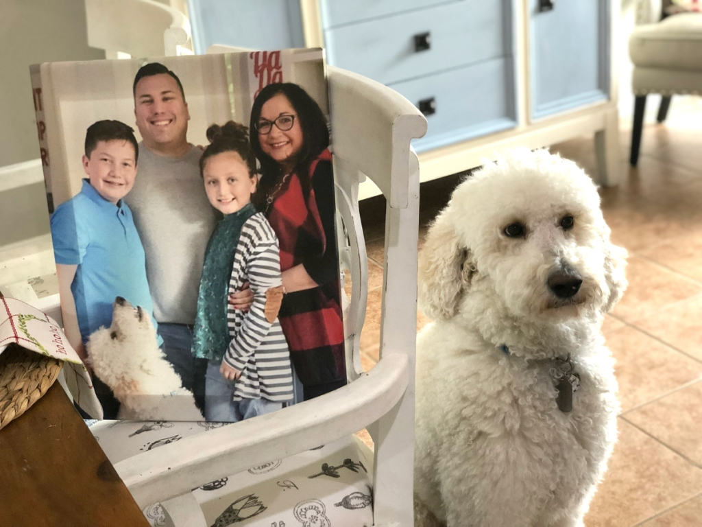 photo canvas on chair next to dog